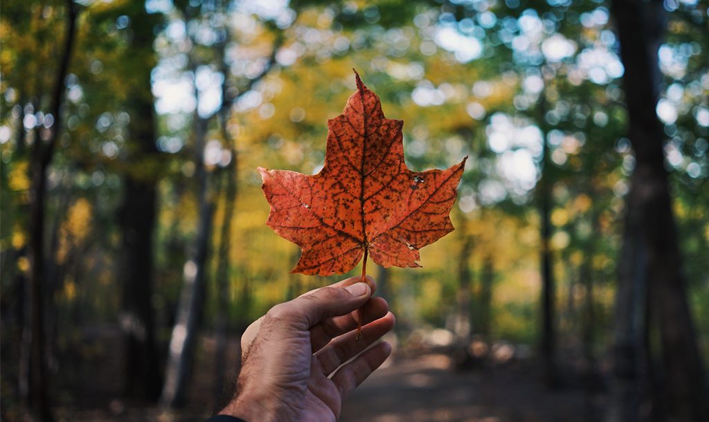 An Autumn leave signifying the best season to sell your home in.