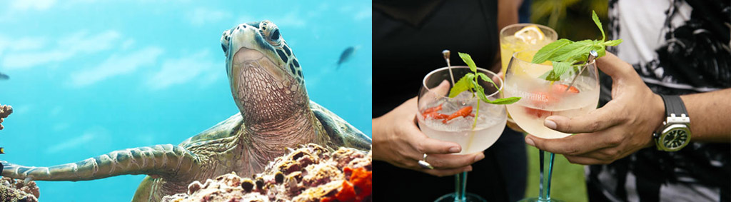 Sydney events Woollhara and Taronga Zoo