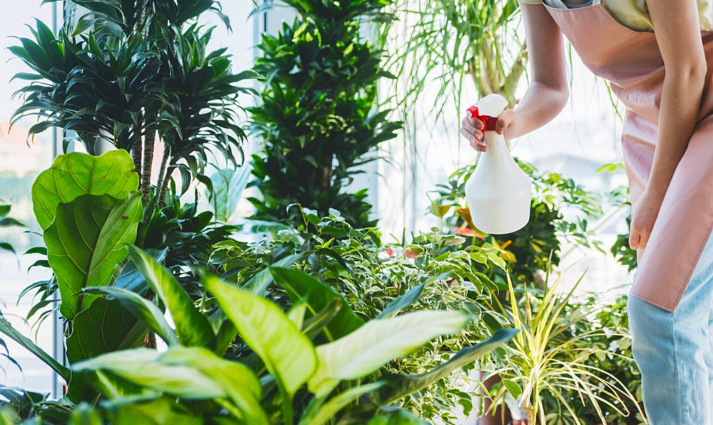 The best indoor plants for Sydney living.